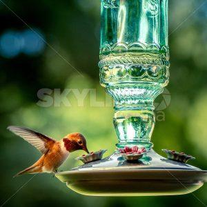 Hummingbird Feeder - Skyline FBA
